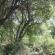טיפול ביער – חלק א'